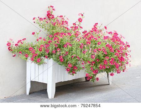 Petunia Flowers In Wooden Pot.