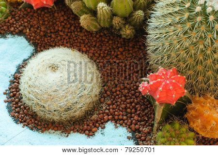 Beautiful Cactus Image At The Garden