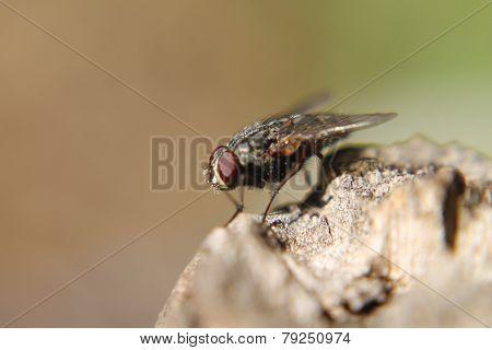 Macro fotografía de insecto