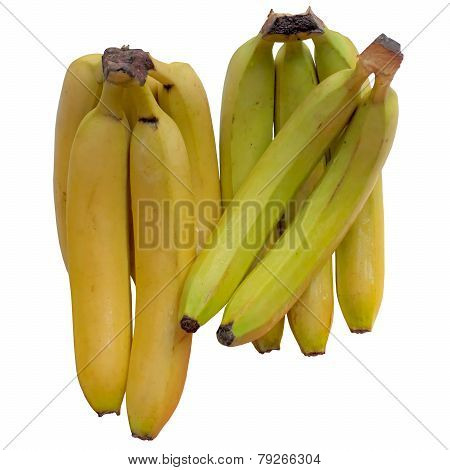 Banana  Tropical.