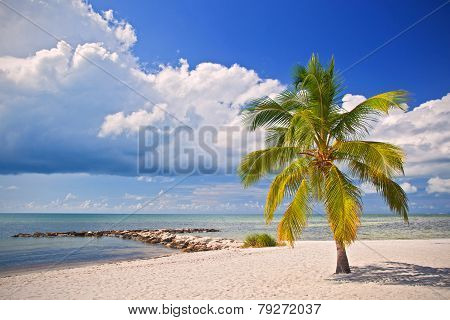 Summer at a tropical paradise in Florida Key West USA