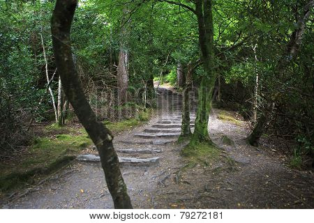 Path in Relict forest of Torc Mountain.