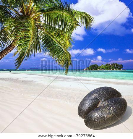 Seychelles islands - white beach and unique Coco de mer