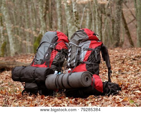 Backpack stands in a clearing in the forest.