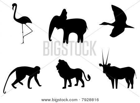 Africans animals