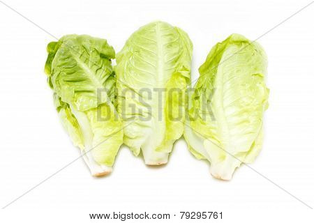 Baby Cos Lettuce Isolated On White.