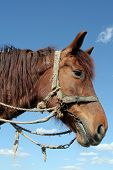 image of workhorses  - A portrait of a workhorse - JPG