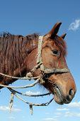 foto of workhorses  - A portrait of a workhorse - JPG