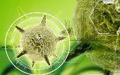 foto of virus  - Digital illustration of  herpes virus in colour  background - JPG