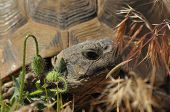 stock photo of gad  - Turtle on the rocky and sandy desert - JPG