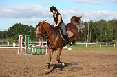 stock photo of breed horse  - Brunette woman riding playful bucking chestnut horse - JPG