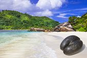 stock photo of coco  -  Seychelles islands  - JPG