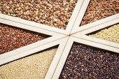 stock photo of quinoa  - variety of gluten free grains  - JPG