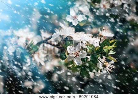 Spring Flowers In A Rainy Day