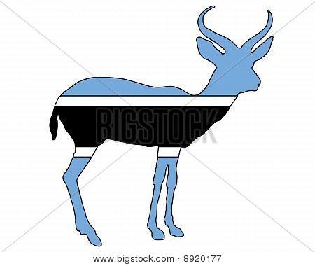 Botswana Antilope