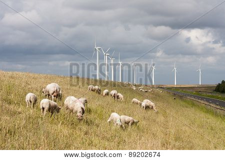 Grazing Sheep At A Dike With Big Windmills Behind Them