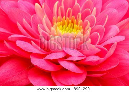 Red  flower close up background