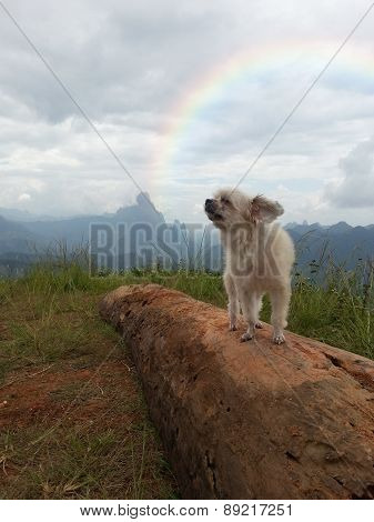 Cute Dog At The Mountain