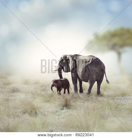 Young Elephant With Its Mother