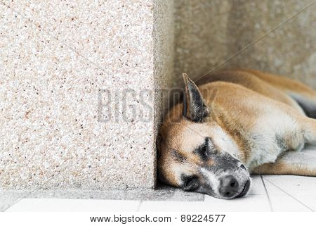 Old Dog Resting On The Floor