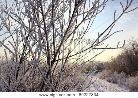 Dawn and branches of trees in frost