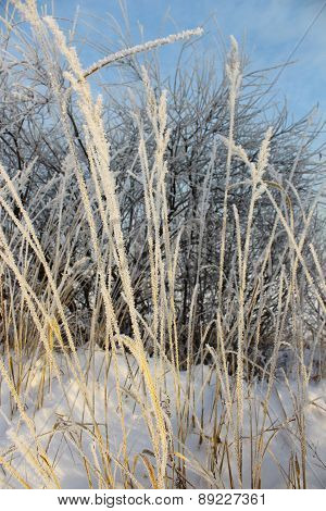 Spikes completely frost