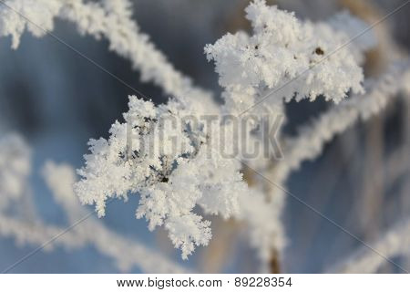 The rime on dry grass, close-up