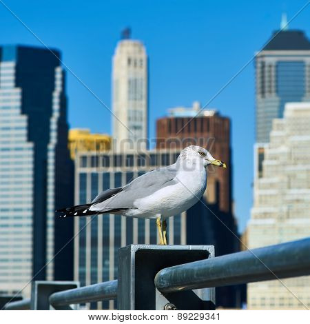Seagull with Manhattan skyline in background, New York City.