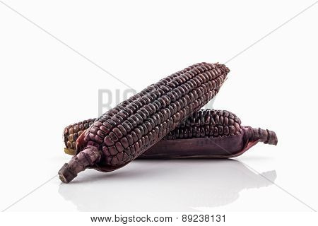 Fresh Purple Organic Corn, Maize .