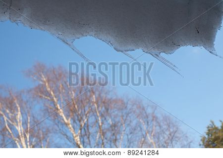 Spring Icicles