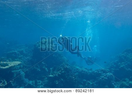 Divers Over A Coral Reef In Tropical Sea, Underwater