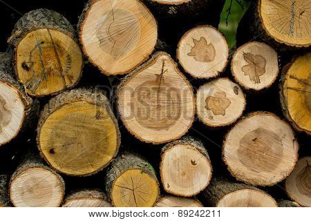 Cut Wood Logs Stacked In A Pile