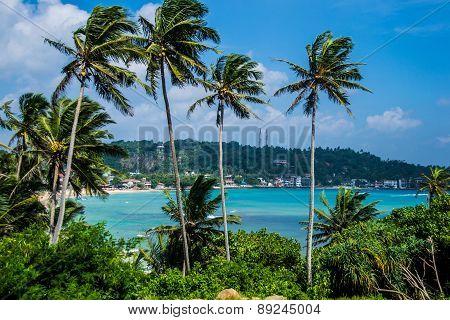 beautiful seascape with palms, ceylon, unawatuna