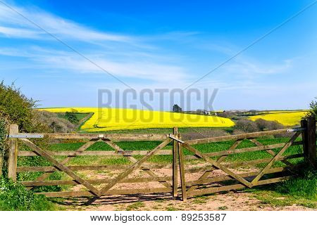 Fields Of Yellow Rapeseed