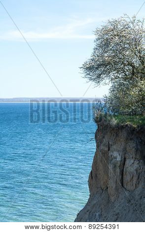 High Coast Cliff At The Baltic Sea, Luebeck Travemuende