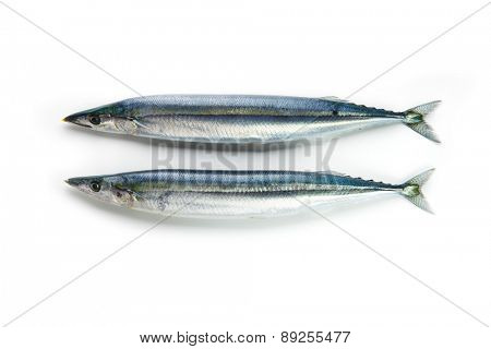 Two nice shaped Pacific saury (Cololabis saira / mackerel pike / sanma ) isolated on white.
