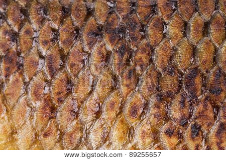 Fried fish scales