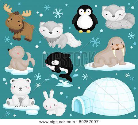 Artic animal