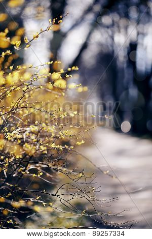 Branches Of Bushes With Yellow Leaves.