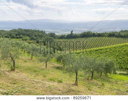 Montalcino (tuscany, Italy)