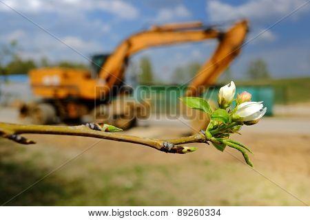 Buds And Excavator