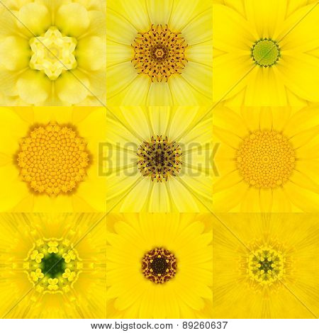 Collection Of Nine Yellow Concentric Flower Mandala Kaleidoscope