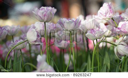 A visit to flower garden