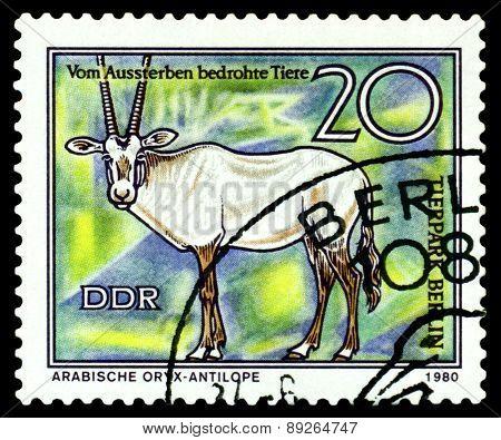 Vintage  Postage Stamp. Arabian Oryx .