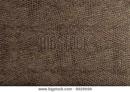 Animal and Reptile Skin Pattern and Texture