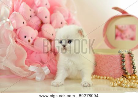 Funny little  British kitten in a pink atmosphere