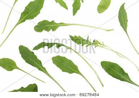 Rucola on white background - close-up