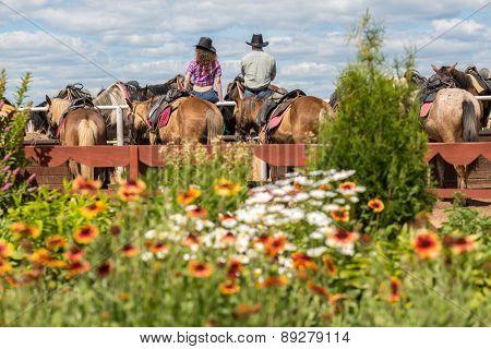 cowboy couple sit back watching at horses