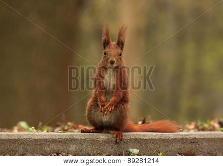 squirrel sitting at road