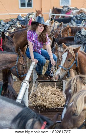 cowboy lady feeding horses in stable closeup